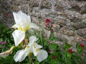 fleurs au pied d'un mur de pierres